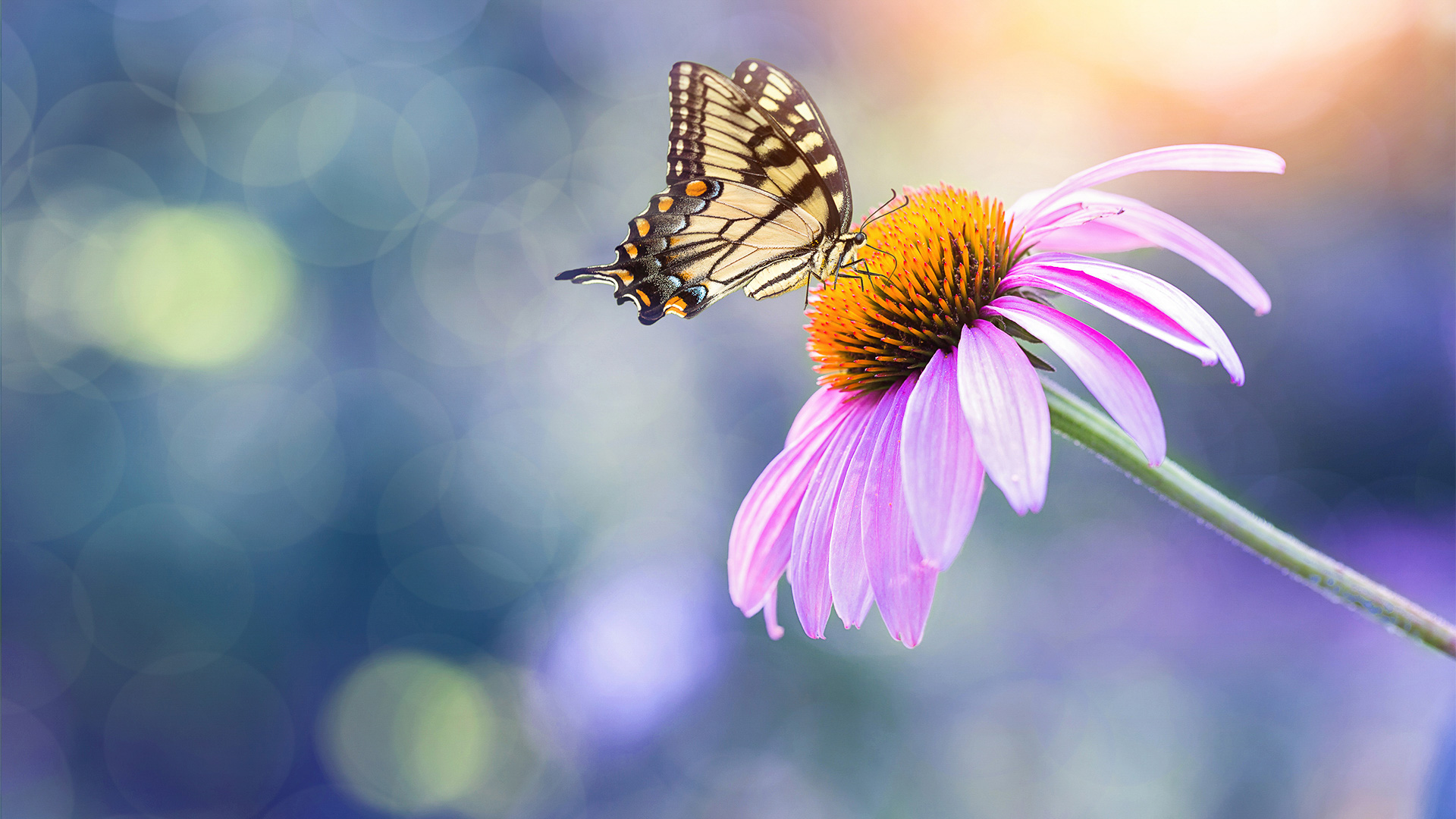 Rule of thirds picture of butterfly and flower