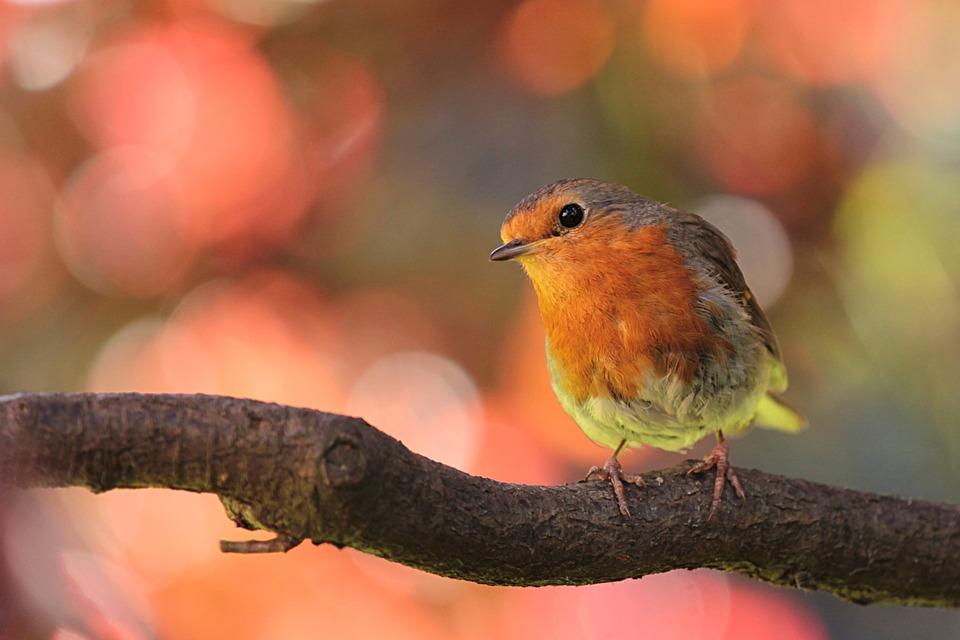 Portrait picture of a bird
